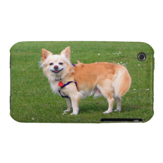Chihuahua dog long-haired beautiful photo iPhone 3 Case-Mate cases