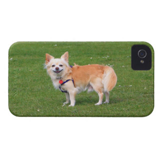 Chihuahua dog long-haired beautiful photo Case-Mate iPhone 4 case