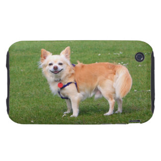 Chihuahua dog long-haired beautiful photo iPhone 3 tough cover