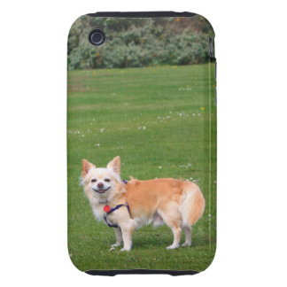 Chihuahua dog long-haired beautiful photo tough iPhone 3 covers