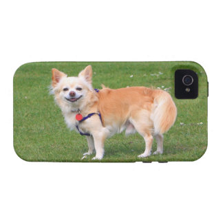 Chihuahua dog long-haired beautiful photo Case-Mate iPhone 4 cover