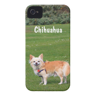 Chihuahua dog long-haired beautiful photo custom iPhone 4 Case-Mate case