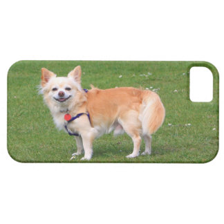 Chihuahua dog long-haired beautiful photo iPhone 5 cover
