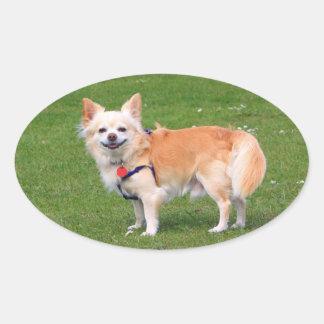 Chihuahua dog long-haired cute beautiful photo oval sticker