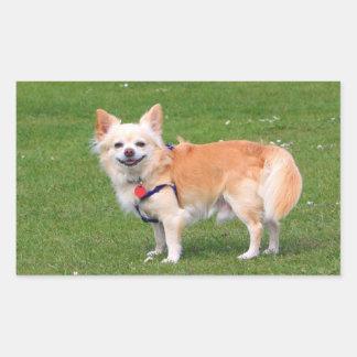 Chihuahua dog long-haired cute beautiful photo rectangular sticker