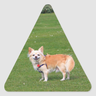 Chihuahua dog long-haired cute beautiful photo triangle sticker