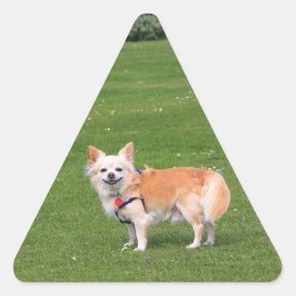 Chihuahua dog long-haired cute beautiful photo triangle sticker