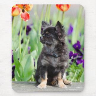 Chihuahua dog lovers beautiful photo mousepad