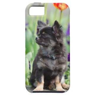Chihuahua dog lovers photo cute iphone 5 case