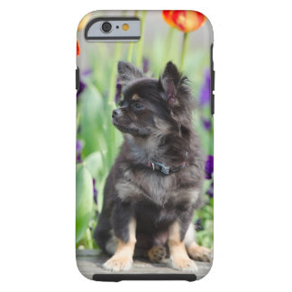 Chihuahua dog lovers photo cute iphone 6 case tough iPhone 6 case
