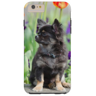 Chihuahua dog lovers photo cute iphone 6 case tough iPhone 6 plus case