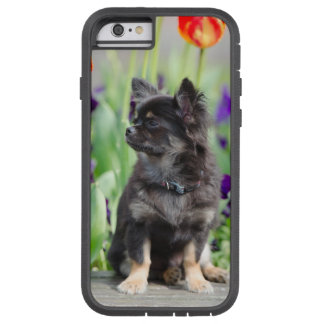 Chihuahua dog lovers photo cute iphone 6 case tough xtreme iPhone 6 case