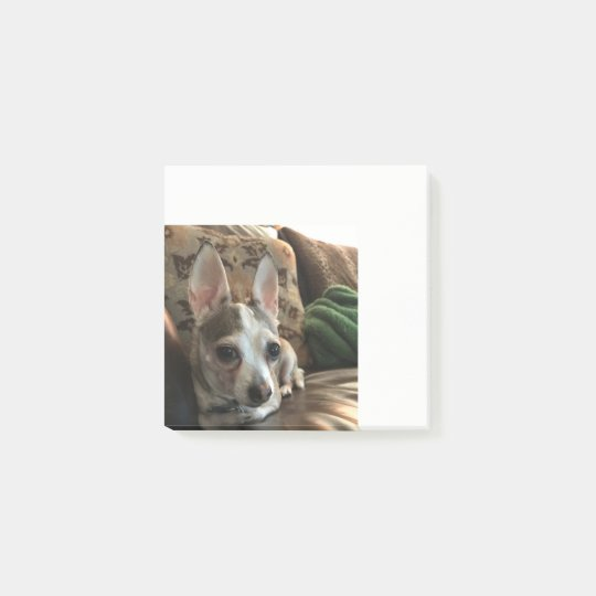Chihuahua Dog Post it Notes
