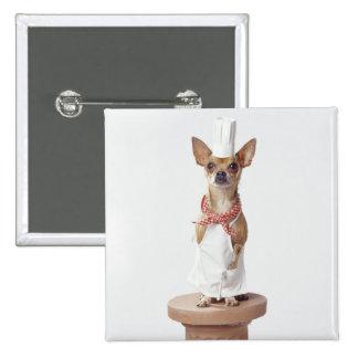 Chihuahua dog wearing chef's whites, studio shot 15 cm square badge
