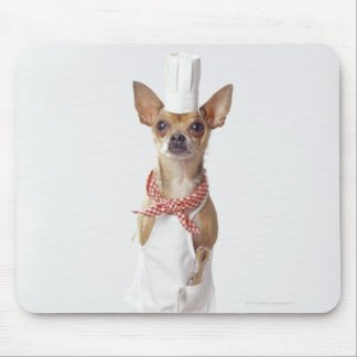 Chihuahua dog wearing chef's whites, studio shot mouse pad