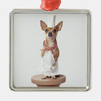 Chihuahua dog wearing chef's whites, studio shot Silver-Colored square decoration