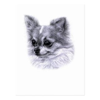 Chihuahua Drawing Postcard