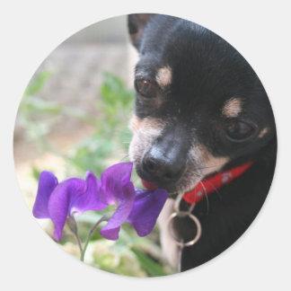 Chihuahua & Flower Round Sticker