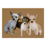 Chihuahua Happy Trio Print