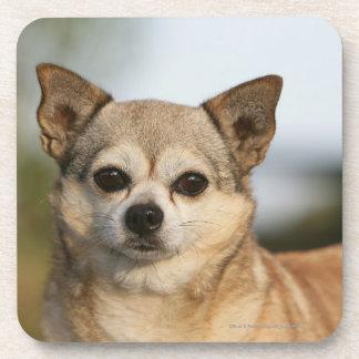 Chihuahua Headshot Coaster