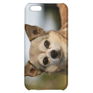 Chihuahua Headshot iPhone 5C Cover
