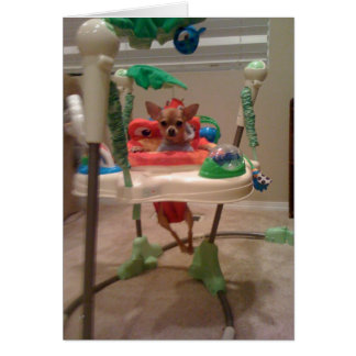 chihuahua in the bouncy chair card