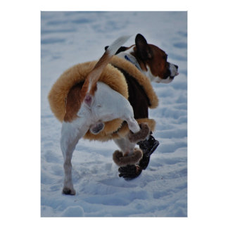 Chihuahua In The Snow Poster