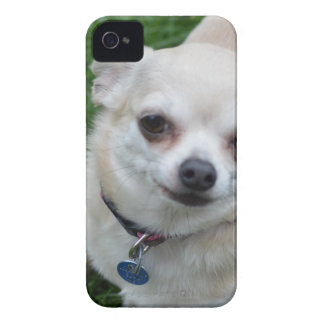 Chihuahua iPhone 4 Case-Mate Cases