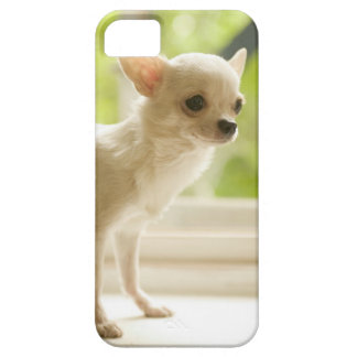 Chihuahua iPhone 5 Cases