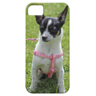 chihuahua  iphone case case for the iPhone 5