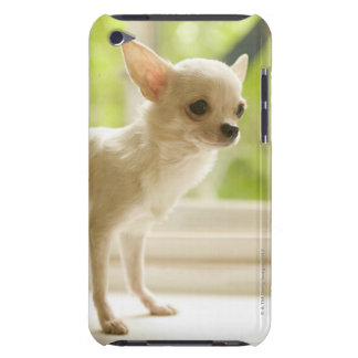 Chihuahua iPod Case-Mate Cases