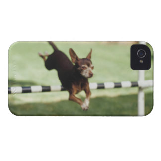 Chihuahua Jumping Hurdle Case-Mate iPhone 4 Case