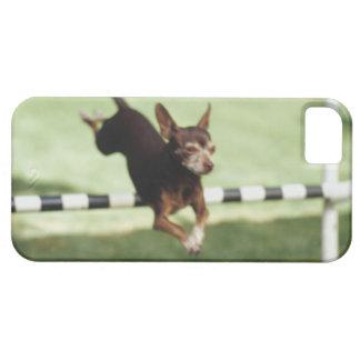 Chihuahua Jumping Hurdle iPhone 5 Covers