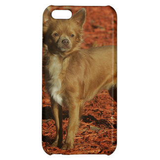 Chihuahua Looking at Camera iPhone 5C Cases