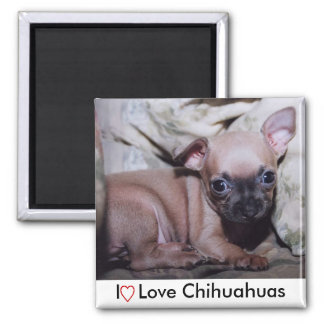 Chihuahua Lover's Delight Square Magnet