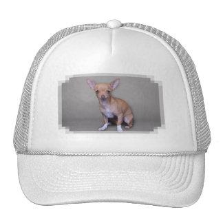 Chihuahua - Matty Hats
