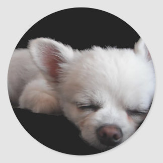 Chihuahua Minnie