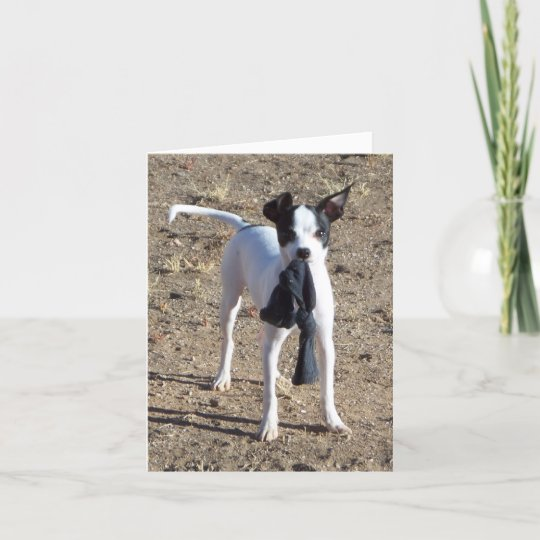 Chihuahua Mischeif, Greeting (blank) Card