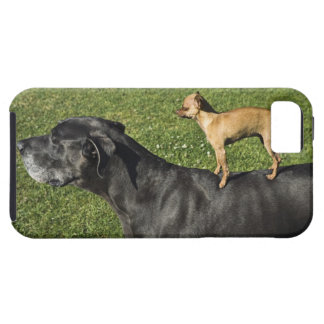 Chihuahua na parte traseira 2 de great dane iPhone 5 case