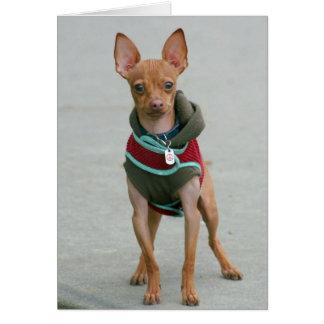Chihuahua notecard