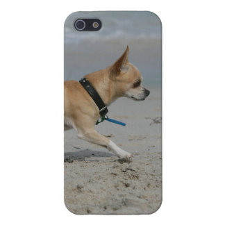 Chihuahua on Beach Cover For iPhone 5/5S