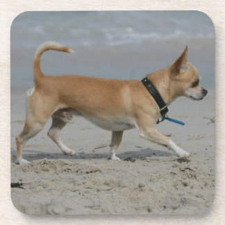 Chihuahua on Beach Drink Coaster