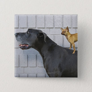 Chihuahua on Great Dane's back 15 Cm Square Badge