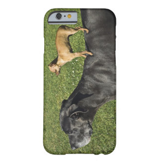 Chihuahua on Great Dane's back 2 Barely There iPhone 6 Case