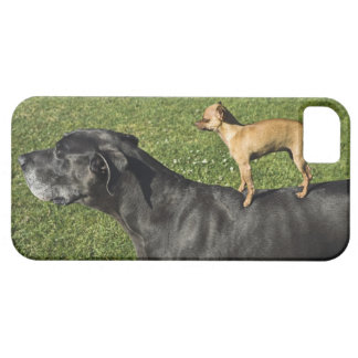 Chihuahua on Great Dane's back 2 Case For The iPhone 5
