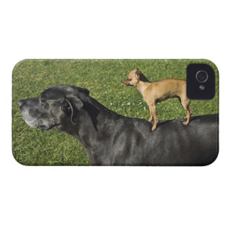 Chihuahua on Great Dane's back 2 iPhone 4 Cases