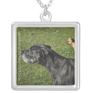 Chihuahua on Great Dane's back 2 Silver Plated Necklace