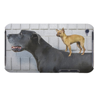 Chihuahua on Great Dane's back Barely There iPod Covers