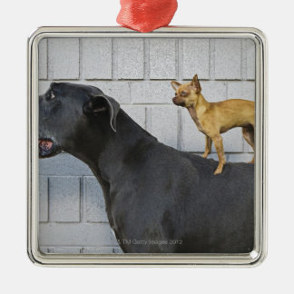 Chihuahua on Great Dane's back Christmas Ornament