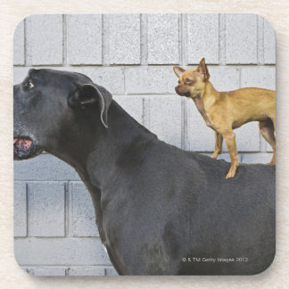 Chihuahua on Great Dane's back Coasters